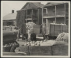 Assembly Street, trucks with cantaloupes in front of houses, 1946