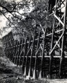 Atlantic Coastline Railroad Trestle Greenville, S.C.