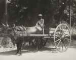 Boy on Ox-Cart