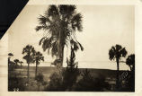 Beach Landscape at Folly in the 1930's